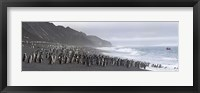 Framed Chinstrap penguins marching to the sea, Bailey Head, Deception Island, Antarctica