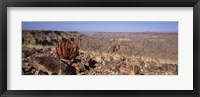 Framed Aloe growing at the edge of a canyon, Fish River Canyon, Namibia