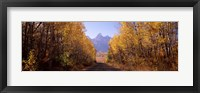 Framed Road passing through a forest, Grand Teton National Park, Teton County, Wyoming, USA