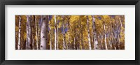 Framed Forest, Grand Teton National Park, Teton County, Wyoming, USA