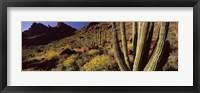 Framed Desert Landscape, Organ Pipe Cactus National Monument, Arizona, USA