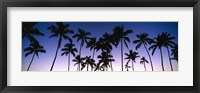 Framed Silhouettes of palm trees at sunset