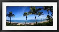 Framed Palm trees on the beach, Maui, Hawaii, USA