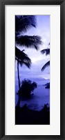 Framed Palm trees on the coast, Colombia (purple and blue)
