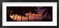 Framed Palm trees on the coast, Colombia (pink sky)