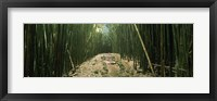 Framed Bamboo forest, Hana Coast, Maui, Hawaii, USA