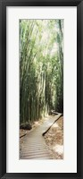 Framed Trail in a bamboo forest, Hana Coast, Maui, Hawaii, USA