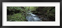 Framed River flowing through a forest, River Lyd, Lydford Gorge, Dartmoor, Devon, England