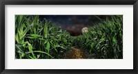 Framed Dark corn field