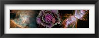 Framed Cabbage with butterfly nebula