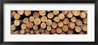 Framed Stack of logs in forest, Burrator Reservoir, Dartmoor, Devon, England
