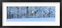 Framed Forest in winter at sunrise, Swabian Alb, Baden-Wurttemberg, Germany