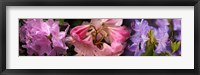 Framed Colorful rhododendrons flowers