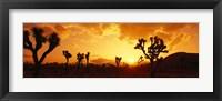Framed Sunset, Joshua Tree Park, California
