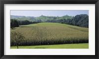 Framed Switzerland, Canton Zug, Panoramic view of Cornfields