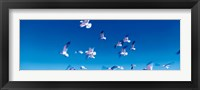 Framed Birds in flight Flagler Beach FL USA