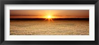 Framed Rice Field, Sacramento Valley, California, USA