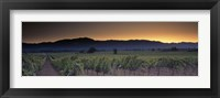 Framed Vineyards on a landscape, Napa Valley, California, USA