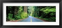 Framed Road passing through a forest, Prairie Creek Redwoods State Park, California, USA