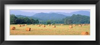 Framed Hay bales in a field, Murphy, North Carolina, USA