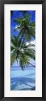 Framed Maldives Palm Trees