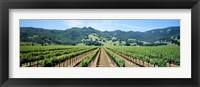 Framed Napa Valley Vineyards Hopland, CA