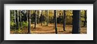 Framed Chestnut Ridge Park Orchard Park NY USA