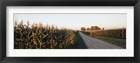 Framed Dirt road passing through fields, Illinois, USA