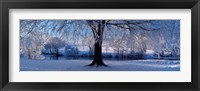 Framed Winter Trees Perkshire Scotland