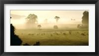 Framed Farmland & Sheep Southland New Zealand