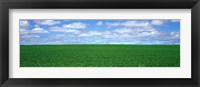 Framed Bush Bean Field, Mcminnville, Oregon, USA