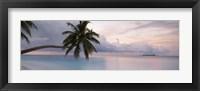 Framed Palm tree, Indian Ocean Maldives