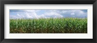 Framed Clouds over a corn field, Christian County, Illinois, USA