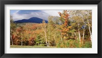 Framed Trees on a field in front of a mountain, Mount Washington, White Mountain National Forest, Bartlett, New Hampshire, USA