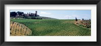 Framed Vineyards and Olive Grove outside San Gimignano Tuscany Italy