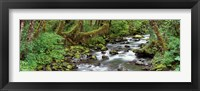 Framed Creek Olympic National Park WA USA