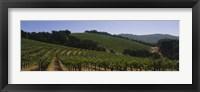 Framed Vineyard on a landscape, Napa Valley, California, USA
