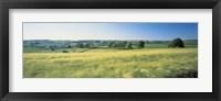 Framed Field Near Barnstaple, North Devon, England, United Kingdom