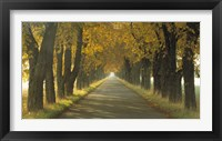 Framed Road w/Autumn Trees Sweden