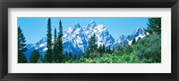Framed Snow covered peaks, Grand Teton National Park WY