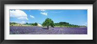 Framed Lavender Field Provence France