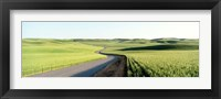 Framed Gravel Road Through Barley and Wheat Fields WA