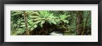 Framed Rainforest, Mt. Field National Park, Tasmania, Australia