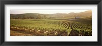Framed Panoramic view of vineyards, Carneros District, Napa Valley, California, USA