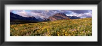 Framed Flowers in a field, Glacier National Park, Montana, USA