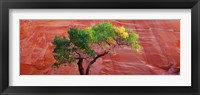 Framed Low Angle View Of A Cottonwood Tree In Front Of A Sandstone Wall, Escalante National Monument, Utah, USA
