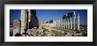 Framed Old ruins on a landscape, Cardo Maximus, Apamea, Syria