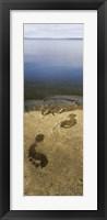 Framed High angle view of wet footprints on a rock, Lake Pielinen, Lieksa, Finland