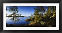 Framed Trees at the lakeside, Lake Saimaa, Puumala, Finland