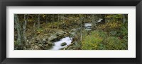 Framed Stream through the Forest, New Hampshire